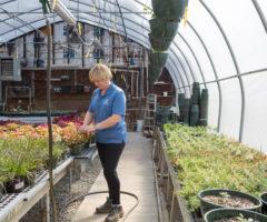 Lake Junaluska Landscaping Manager Melissa Tinsley works in the greenhouse at Lake Junaluska.