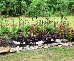 East Henderson High's garden.