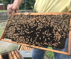 Apiary inspector Don Hopkins displays part of a beehive at the NCDA&CS Beneficial Insects Lab.