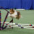 American Kennel Club Agility Trial Returns to the WNC Ag Center